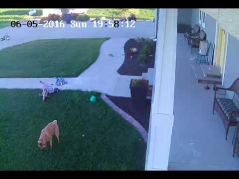 Neighbors stupid dog pooping in my yard.
