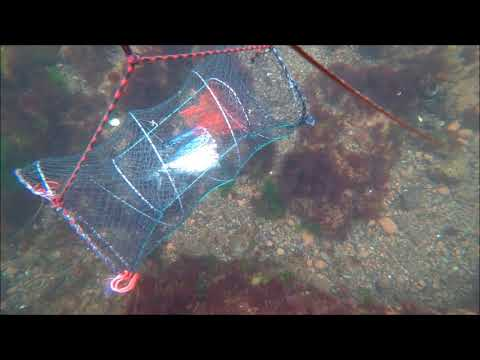 GoPro Camera in a Lobster Trap