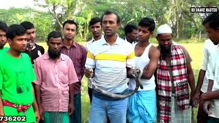 পটুয়াখালী রাজ্জাক বিশ্বাস এর সাপ ধরার লাইভ ভিডিও নতুন পর্ব - ২৬   এক্সক্লুসিভ   BD Snake Master  HD