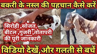 Hamla Bakri ki Pehchan | How To identify Goats pregnancy | Urdu Hindi