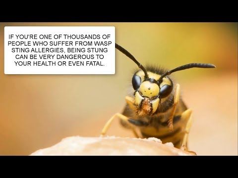 HOW TO GET RID OF WASPS ~ WASP CONTROL UK ~ CATCH-IT LTD PEST CONTROL LONDON
