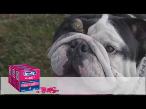 Giving Benadryl To Your Dog The Complete Guide