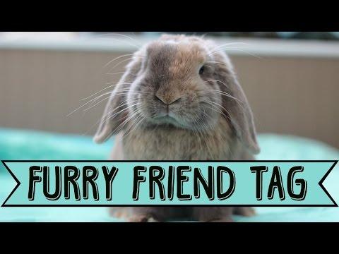 FURRY FRIEND TAG w/ Bugs!