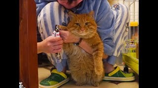 Download 给流浪橘猫洗澡洗到掉色,你这橘色是染的吧? Video