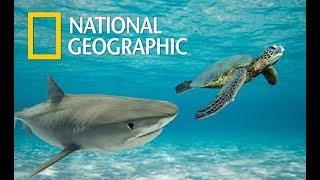 Great Barrier Reef | Queensland Australia Wildlife - Great Natural Wonder (Nat Geo)