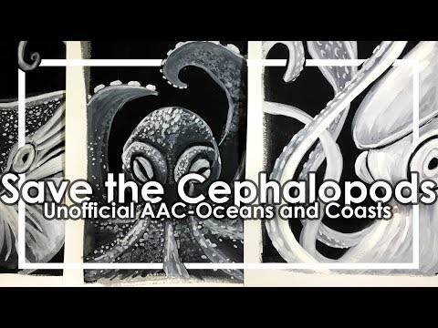 Squids, Octopi, and Nautilus-Unofficial Animal Artists Collective (Oceans and Coasts)