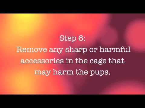 10 Easy Steps To Raise Your Baby Hamsters! (What do you do when your hamsters have babies?)