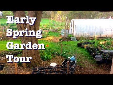Spring Garden Tour - .1 acre garden is waking up!