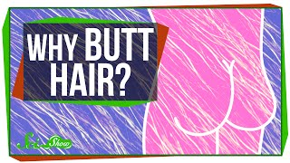 Why Do We Have Butt Hair?