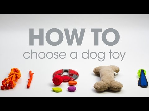 How To Choose A Dog Toy