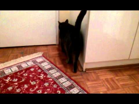 Male cat in heat