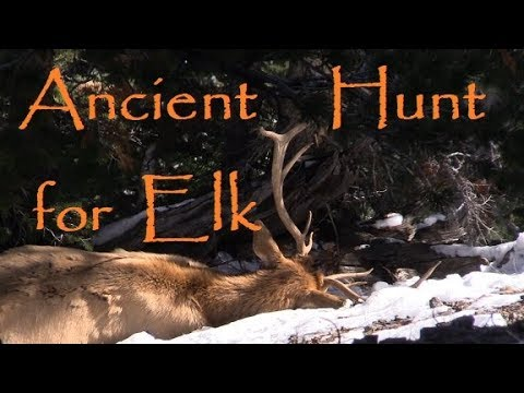 Archery Public Land Bull Elk. Primitive Bow Hunt with Stone Points in Action