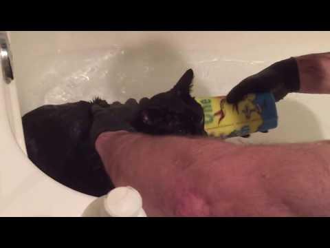 Psycho Cat Poop Bath