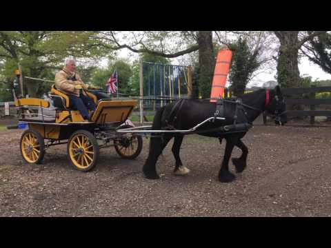 Training a Fell mare to drive - arena hazards and noise training.