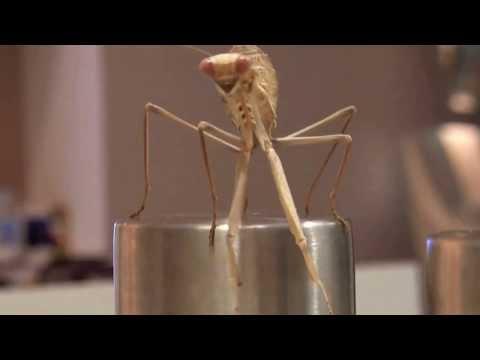 Mantis Monsters Aliens Caught On Tape Killer, Aggression, Assault, Mantis Demon Attack