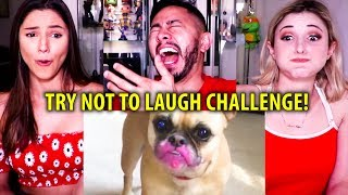 TRY NOT TO LAUGH CHALLENGE | Funny Cat & Dog Vines | Reaction!