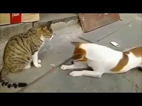 Angry Cat Fighting with Dogs | Cat vs Dog fight STOP LAUGHING IF YOU CAN - Extremely FUNNY ANIMAL