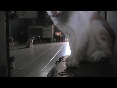 1 ROOM HDB. 48 CATS