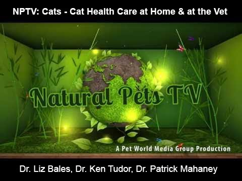 Natural Pets TV: Cats - Episode 7 - Natural Care + Home Treatments & Care