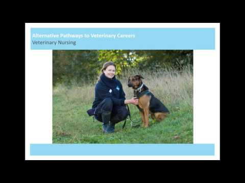 Alternative Pathways to Veterinary Careers