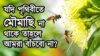 কি হবে যদি পৃথিবীতে কোন মৌমাছি না থাকে? মৌমাছি না থাকলে পৃথিবীতে মানবজাতি কতদিন টিকবে?   Bee Mystery