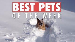 Best Pets of the Week | November 2018 Week 2