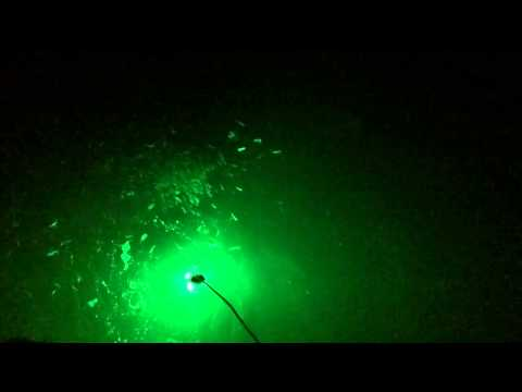Green light causes fishing frenzy! South Padre Island! 27 S