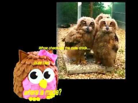Owl cakes making classes