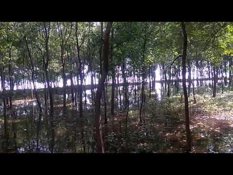 Forest under water.