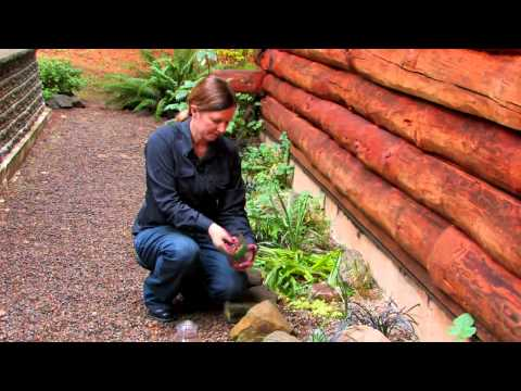 Tips to Keep a Cat Out of the Garden