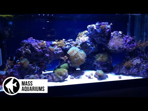 NO SUMP, NO SKIMMER, NO PROBLEM:Successfully Running a Reef Aquarium without using a Protein Skimmer