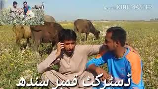 saleem sahil funny Video Nushki