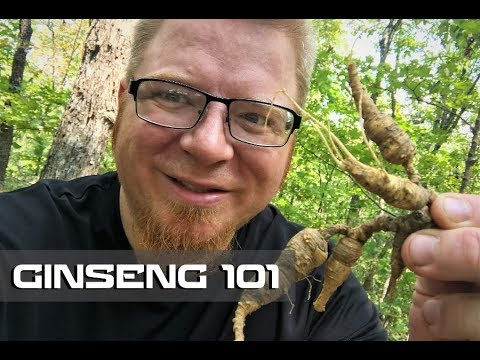 Ginseng 101 - Where to Find - How to Harvest