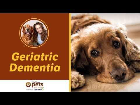 Dr. Becker Discusses Geriatric Dementia
