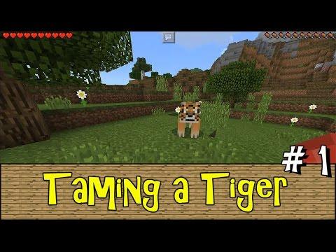 TAMING A TIGER !!! Episode 1   Minecraft PE Addon Survival