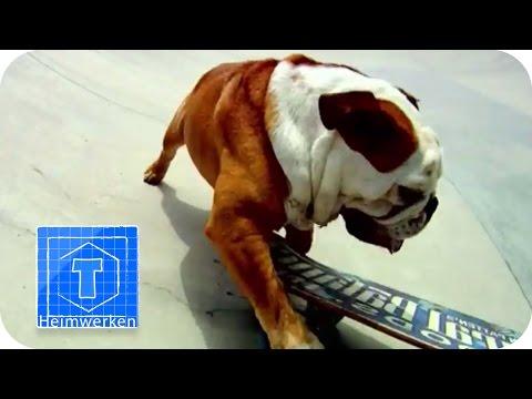 Tierische Supersportler | ToolTown