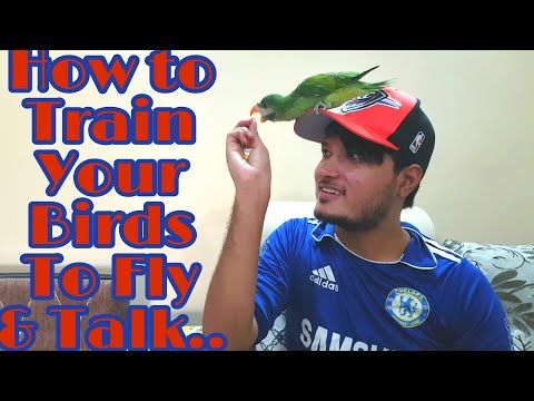 My Cute & Funny Parrot Story - How To Train Your Parrots To Talk & Fly