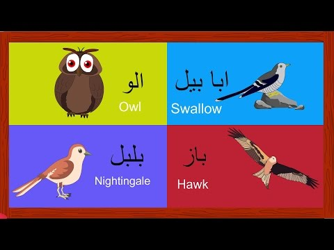 Learn Birds Names for Kids in Urdu | پردو کے نام | Birds Song and More | Urdu Rhymes Collection