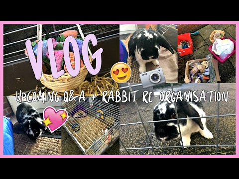 VLOG: Upcoming Q&A + Rabbit Re-organisation!