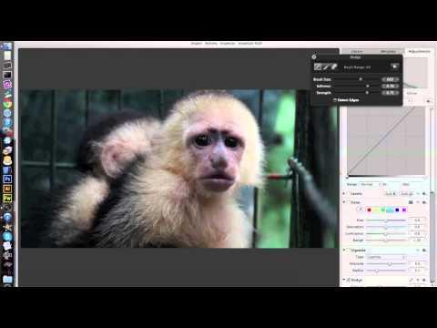 Enhancing Monkey Photos: Aperture Tutorial