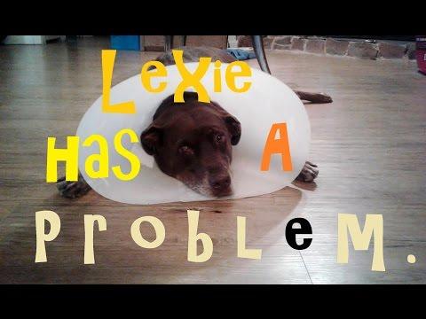 Cyst on dog's eye- Dogs Life Episode 04