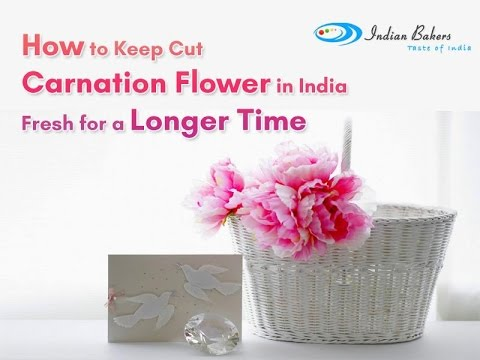 How to keep cut carnation flower in India fresh for a longer time? - indianbakers.com