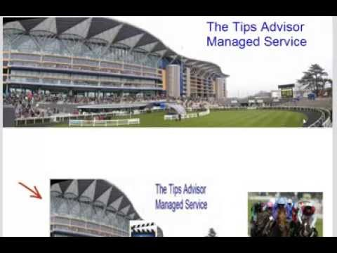 Best Horse Racing Tips Advisor Manager Service