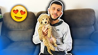 NEW MEMBER TO MY FAMILY! I GOT A NEW DOG!