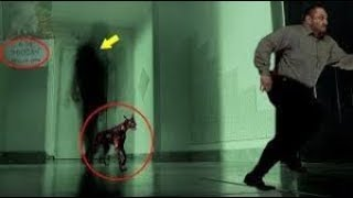 5 Creepy Tales Of Ghostly Dogs   Real Ghost Dogs