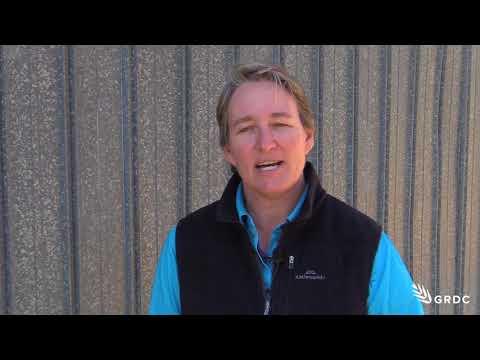 Managing Rutherglen bugs - Melina Miles | 2017 | GRDC Update Rowena | Northern region