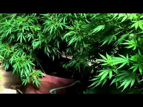 Outdoor Grow 03