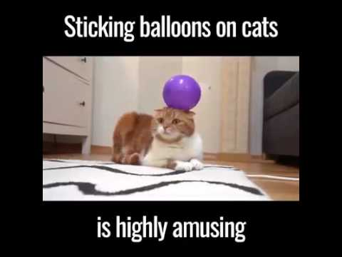 Sticking Balloons on Cat