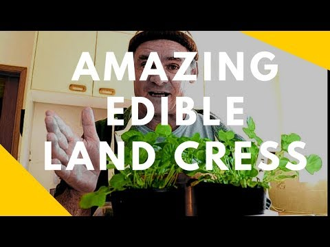 How To Grow Land Cress & Organic Pest Control