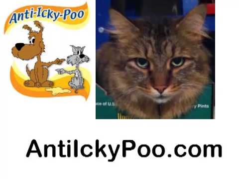 Anti Icky Poo Gets the Pet Stink Out